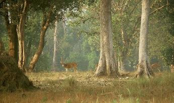 travel-indiakanha-national-parkaxis-deer